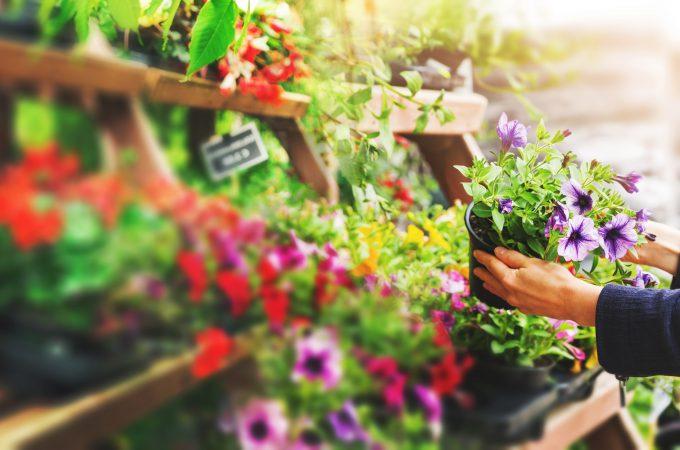 Jednoroczne kwiaty do ogrodu